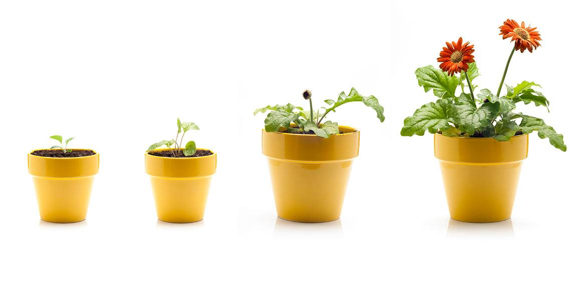 growing potted marketing maintained plants
